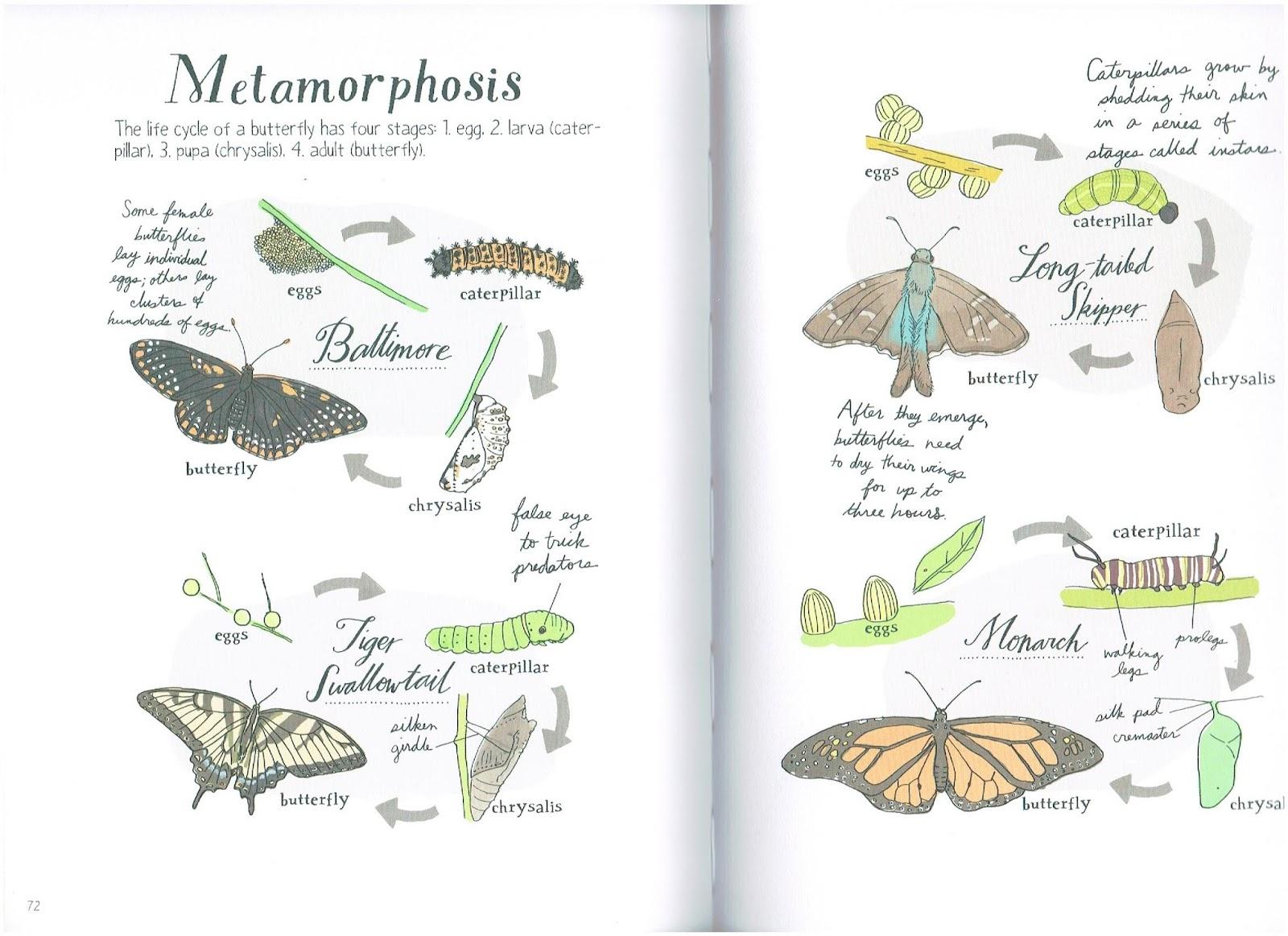 Nature Anatomy by Julia Rothman – joy murray –art ~ books ~ life