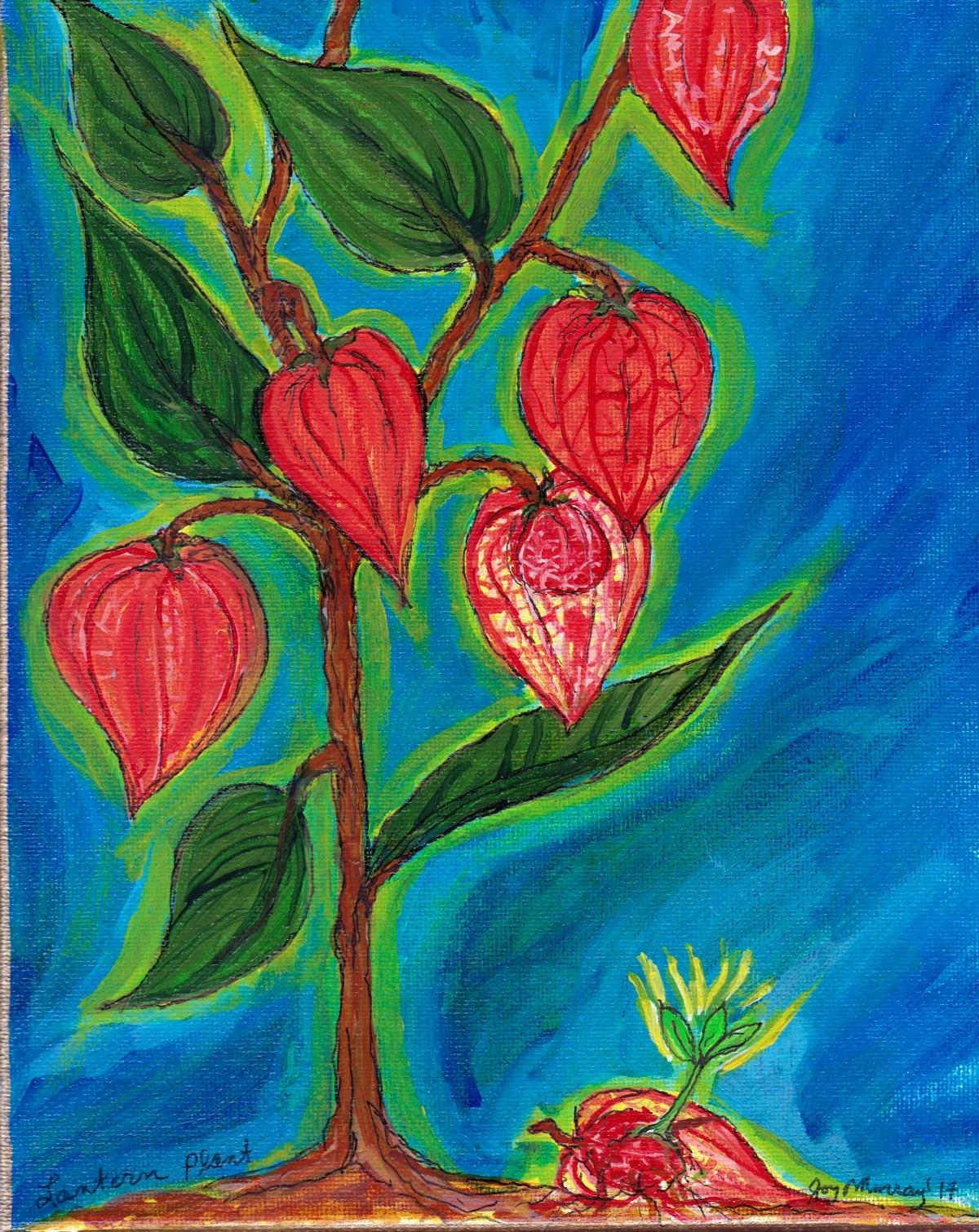 lantern plant