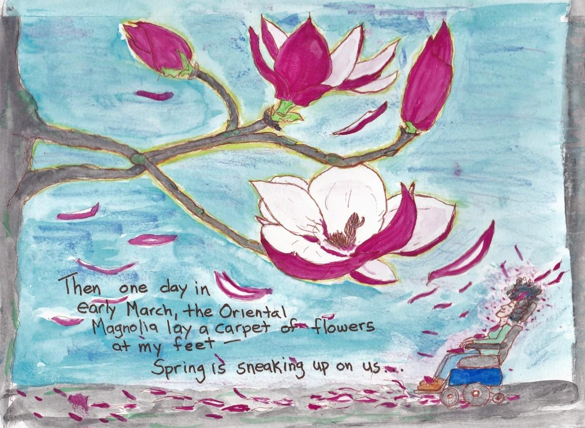 oriental magnolia