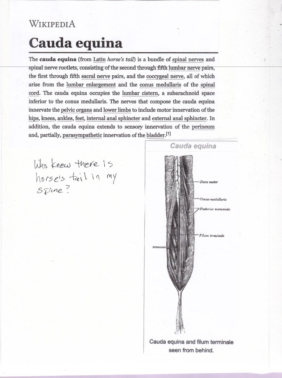 spine 4