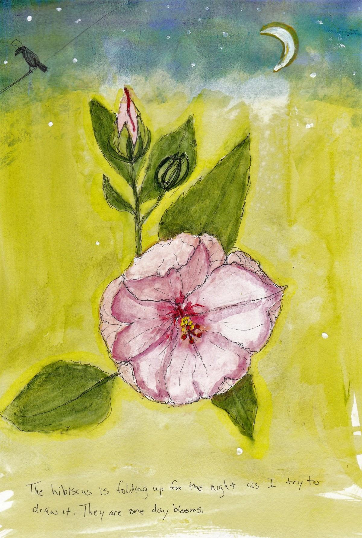 05-24 hibiscus