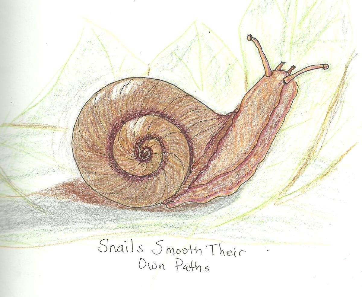 30 snail